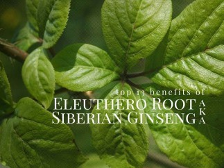 Eleuthero Root (Siberian Ginseng) Top 13 Health Benefits