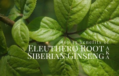 top-benefits-of-eleuthero