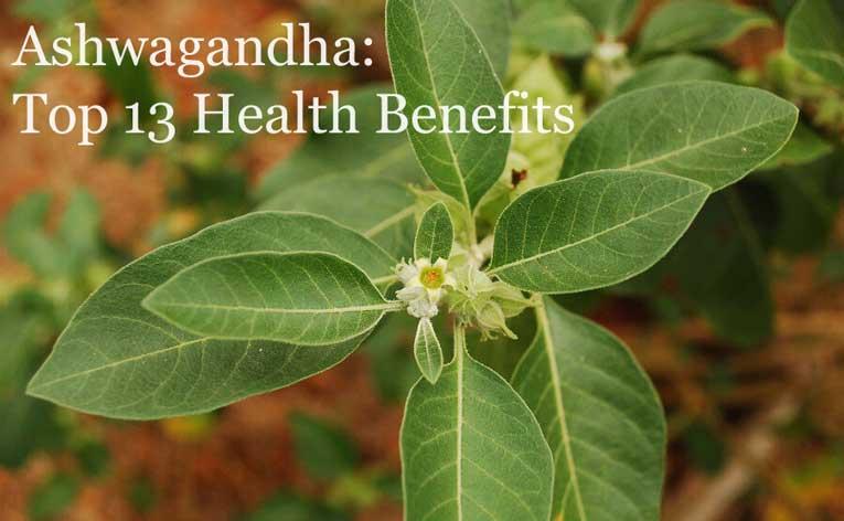 Health Benefits of Ashwagandha