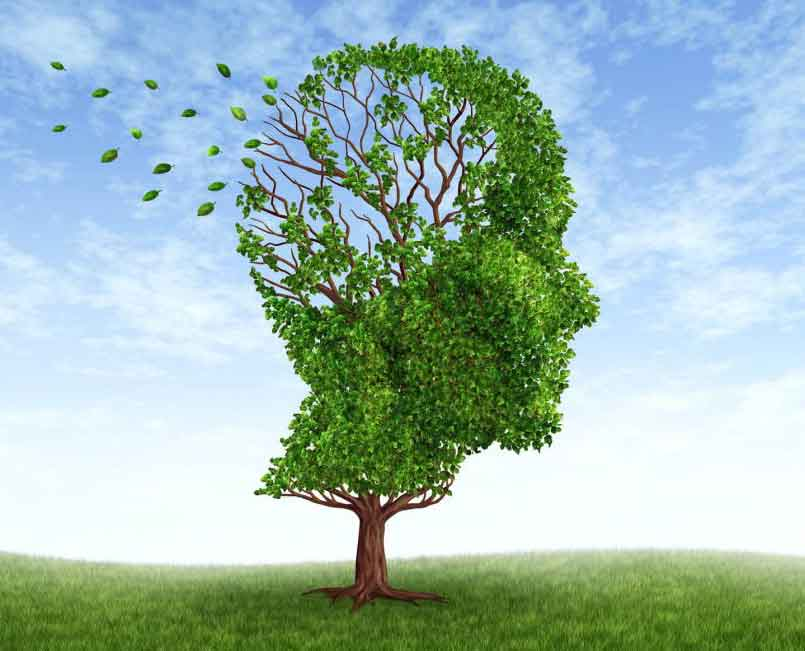 herbs for boosting memory and brain function