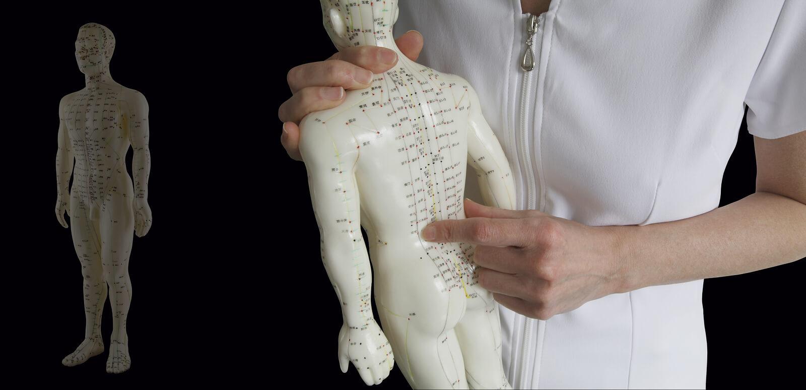 Acupuncture Model and Acupuncturist