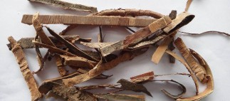 Buckthorn Bark: Digestive Health Benefits For All