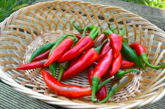 African Bird Pepper: Top Health Benefits [Latest Research]