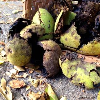 Benefits and Uses of Black Walnut Hulls