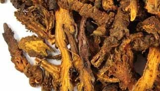 coptis root