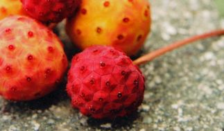 japanese dogwood fruit kousa benefits