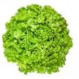 green_leaf_lettuce