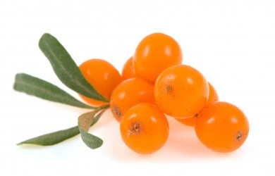 sea buckthorn  isolated on the white