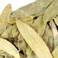 p-751-senna-leaf-whole