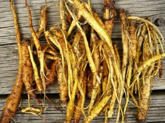 Yellow Dock Root Tea: Top 6 Health Benefits