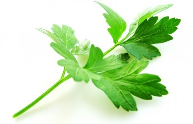 HERBAL TRANSFORMATION: FROM GARNISH TO PARSLEY ROOT