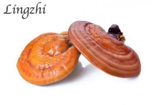 lingzhi-mushroom