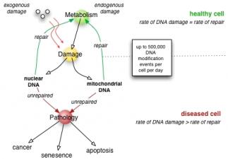 DNA Repair Function