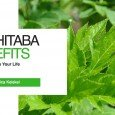 Benefits of Ashitaba