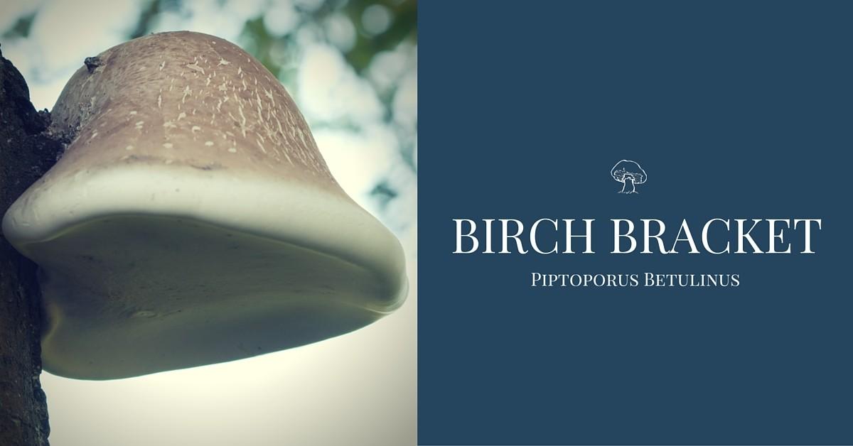 Birch bracket mushroom