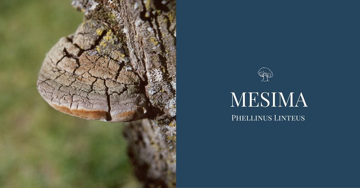 Mesima