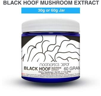 black hoof mushroom extract powder