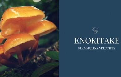 ENOKITAKE MUSHROOM