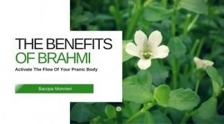 The Benefits of Bacopa Monnieri (Brahmi, Gotu Kola)