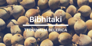 Terminalia Belerica Bibhitaki uses, health benefits and side effects