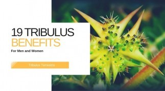 Tribulus Terrestris: 19 Mind-Blowing Benefits (Today)