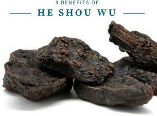 He Shou wu Foti