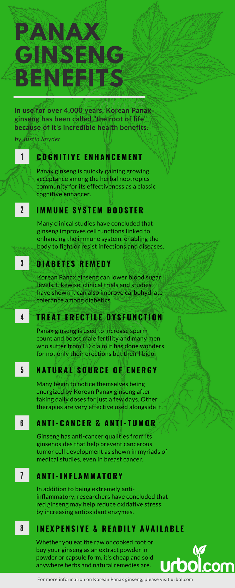 korean panax ginseng infographic