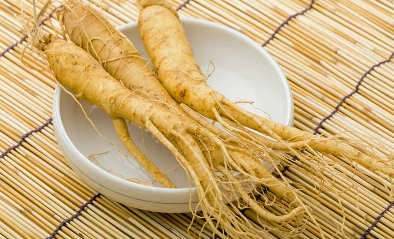 panax ginseng korean root