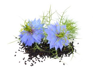 Health Benefits of Black Sesame Seeds - Nigella seeds and flowers