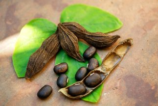 Natural Mood Stabilizers - Mucuna Pruriens