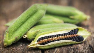 Health Benefits of Black Sesame Seeds - Seed pod