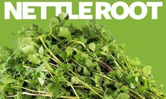 nettle root testosterone-replacement therapy