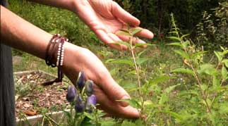 healing plants