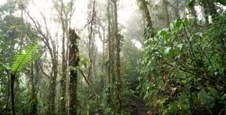 rainforest herbs