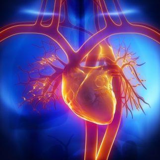 Health Benefits of Chestnut Mushrooms - Cardiovascular system