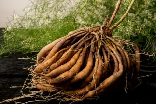 Health Benefits of Shatavari - Roots